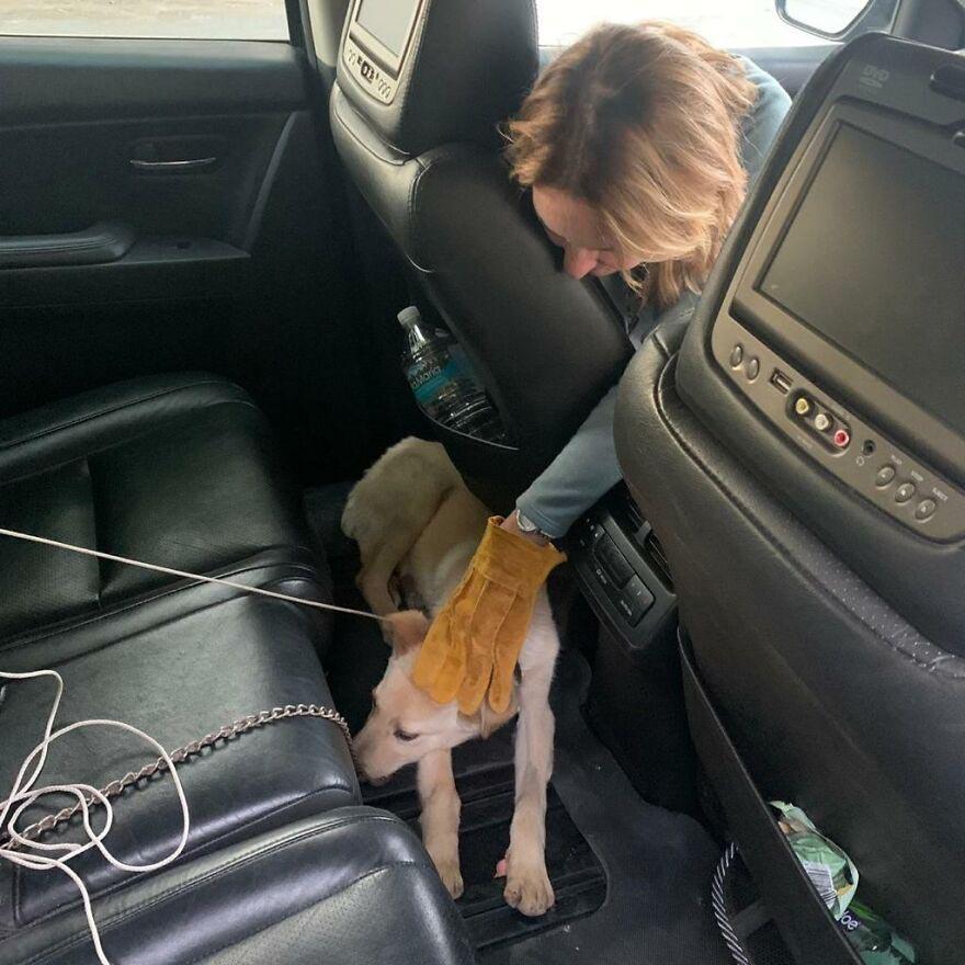 cachorro foi resgatado