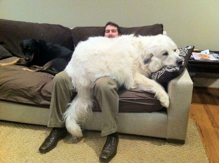 cachorro folgado