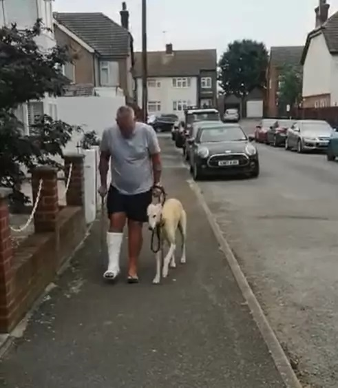 cachorro mancando