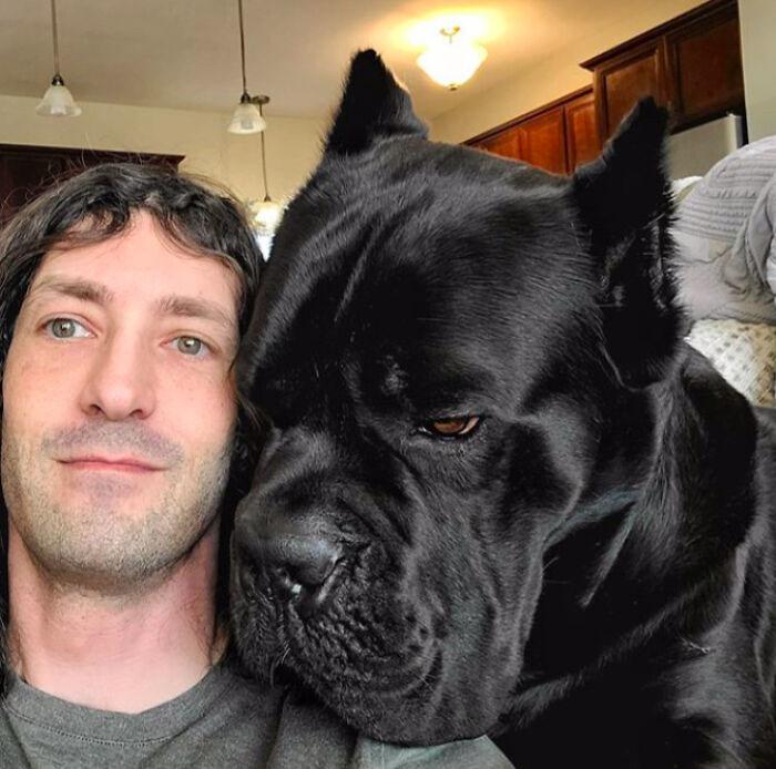 cachorro muito grande
