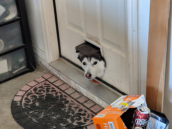cachorro na portinha