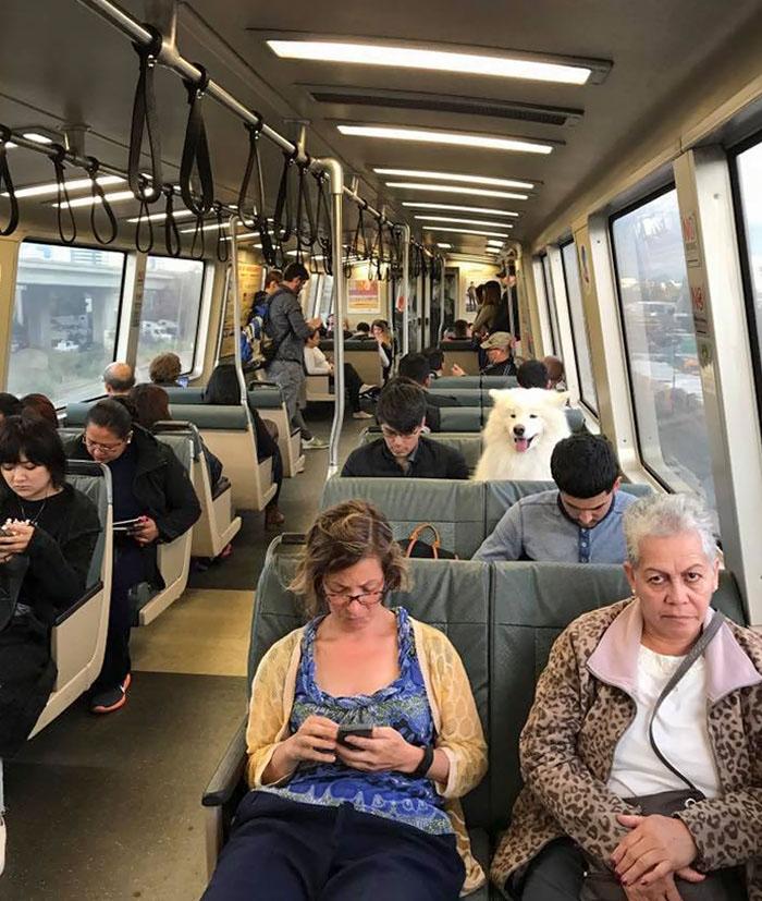 cachorro no trem