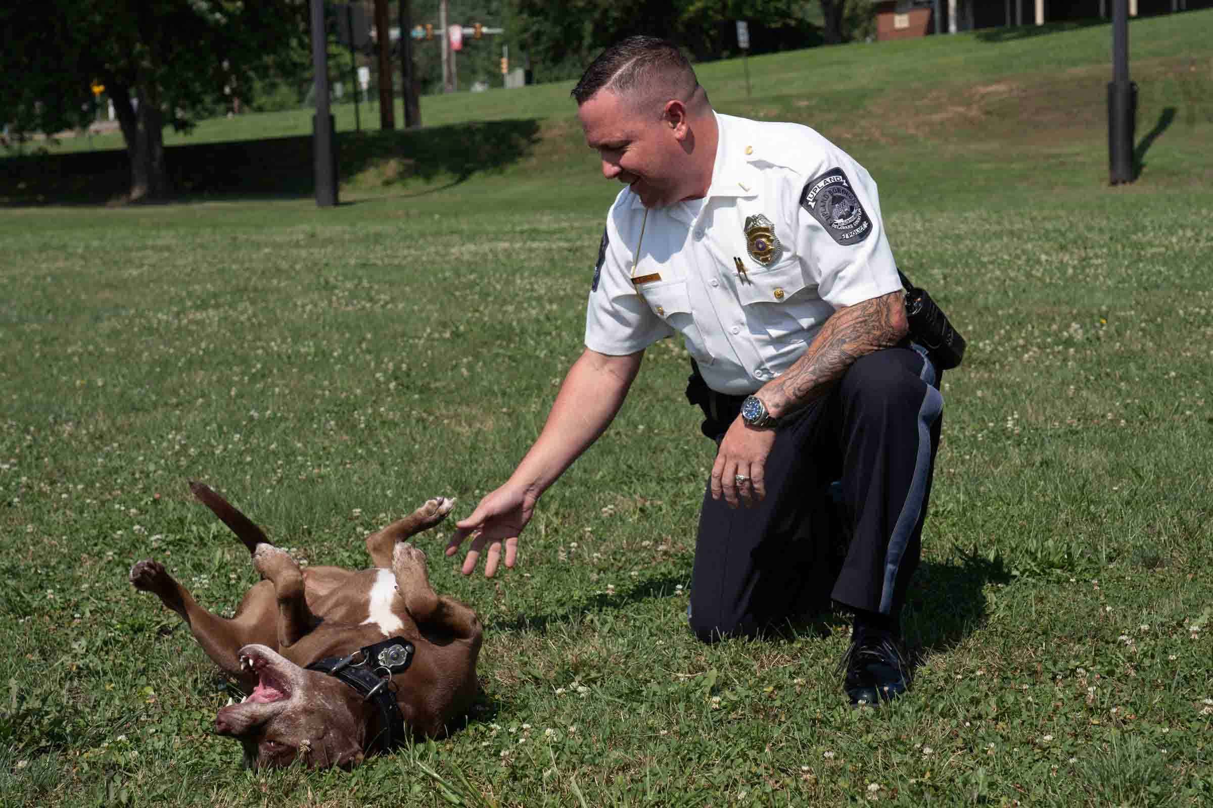 cão da polícia