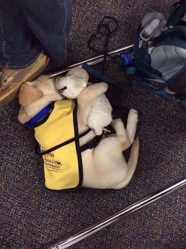 cachorro terapeuta
