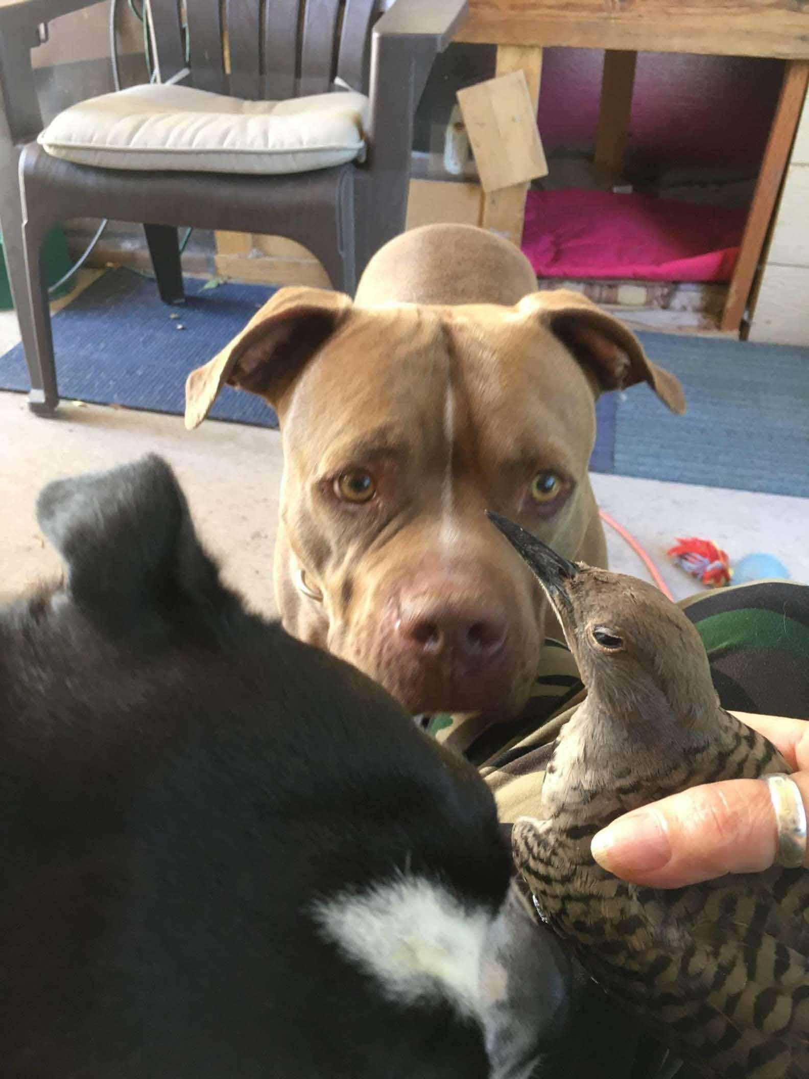 cachorro traz pássaro ferido para casa