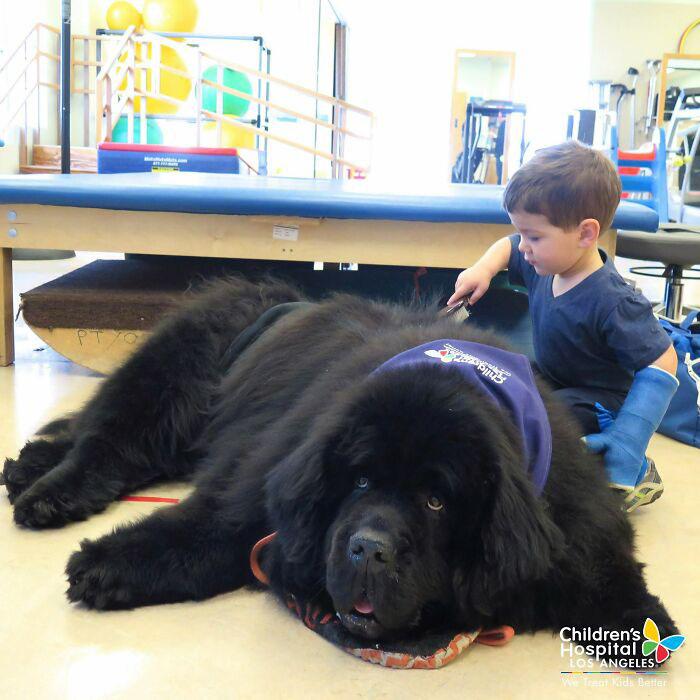 cachorros gigantes foto