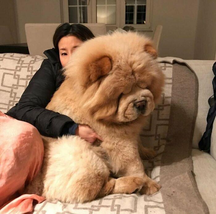 cachorros gigantes fotos