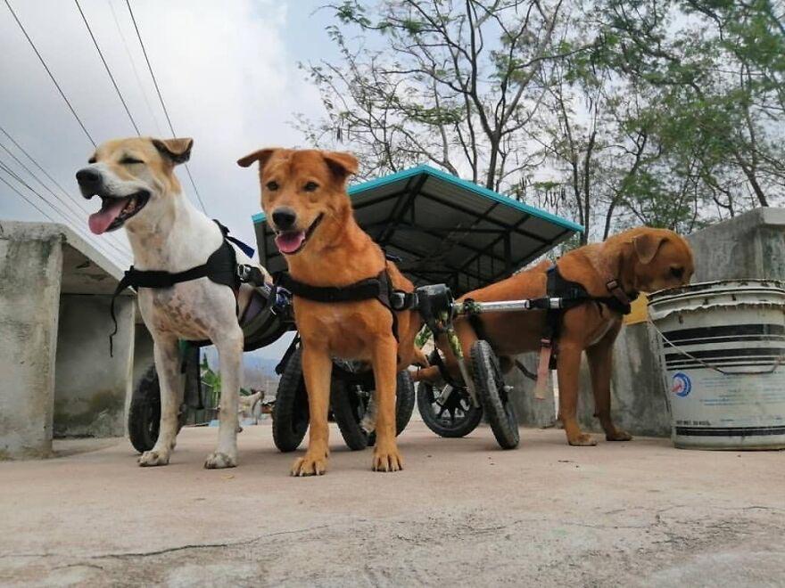 cadeiras de rodas para cães
