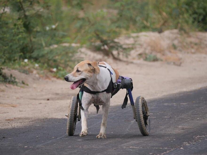 cão voltou a andar