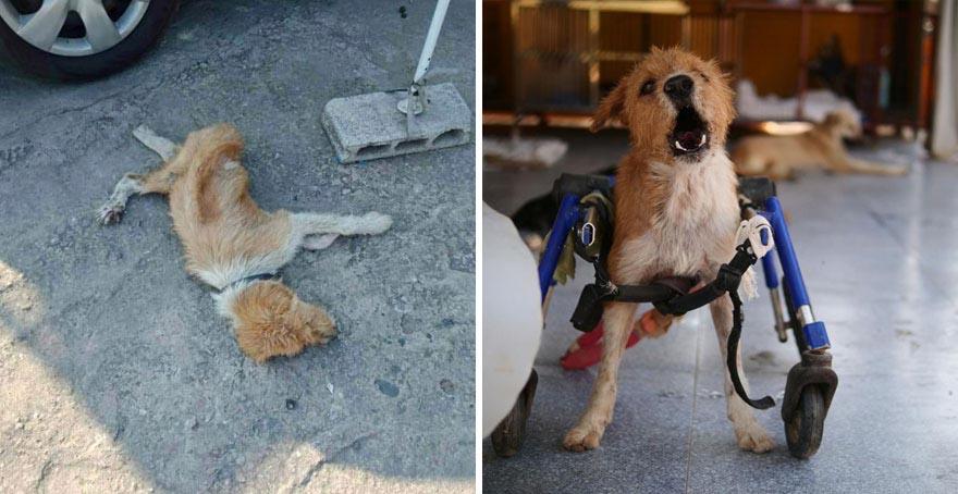 chef ajuda cachorros deficientes
