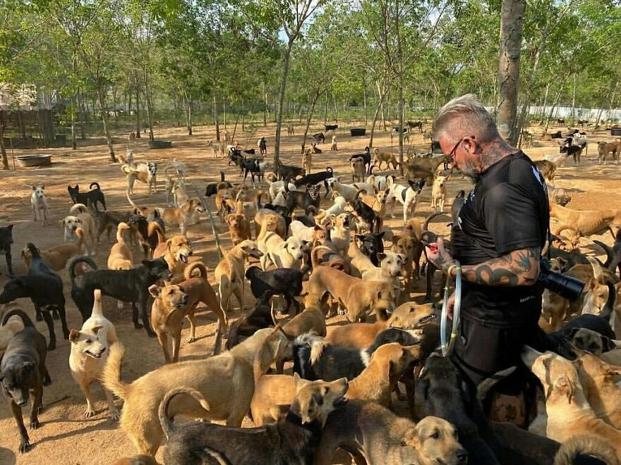 chef ajuda milhares de cachorros