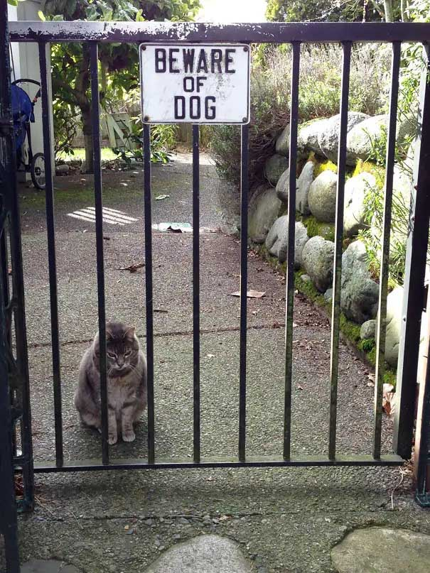 cuidado com o cachorro