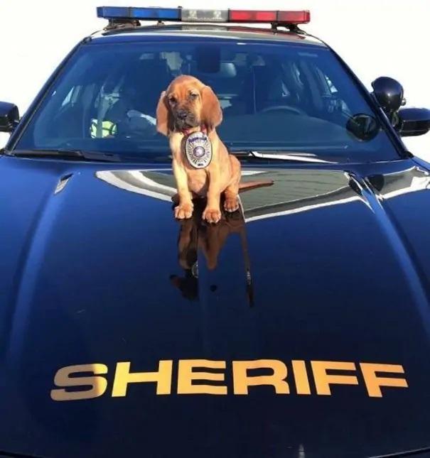 deseje boa sorte cão policial