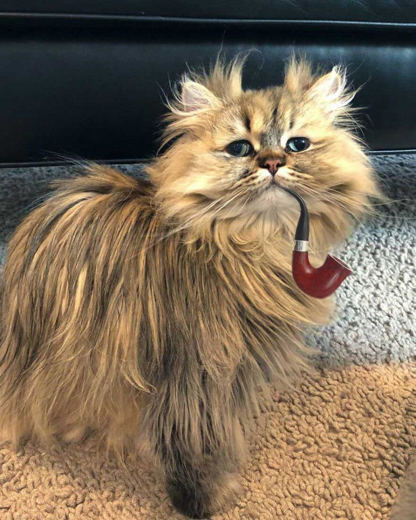 gatinho lindo