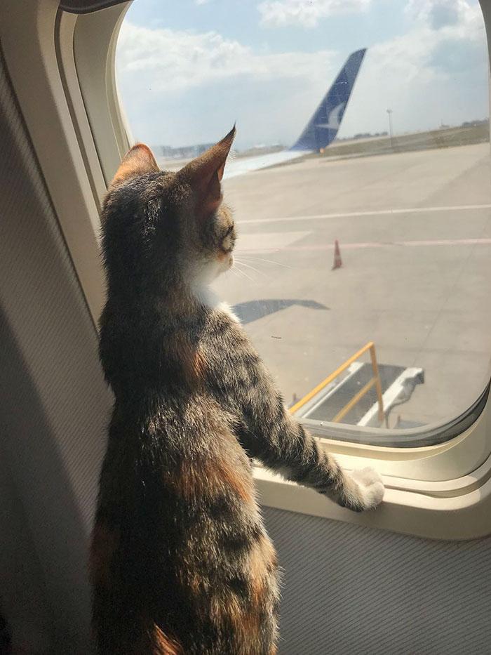 gatinho no avião