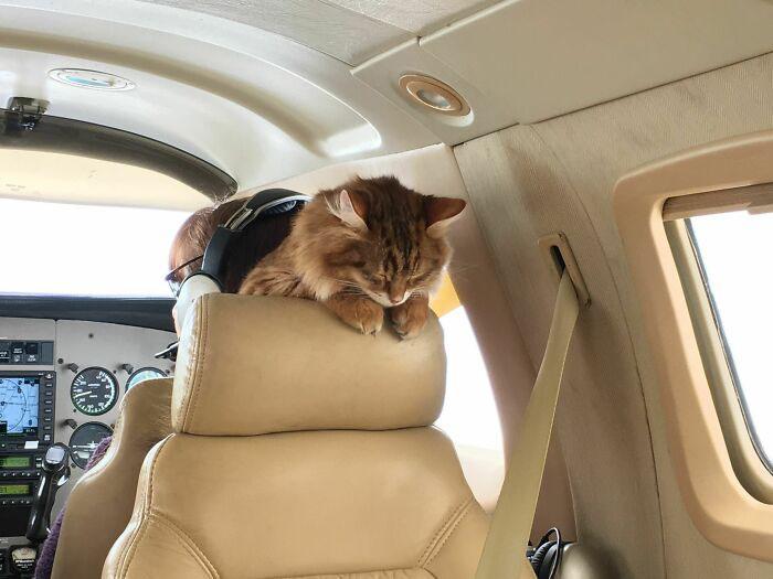 gato viajante