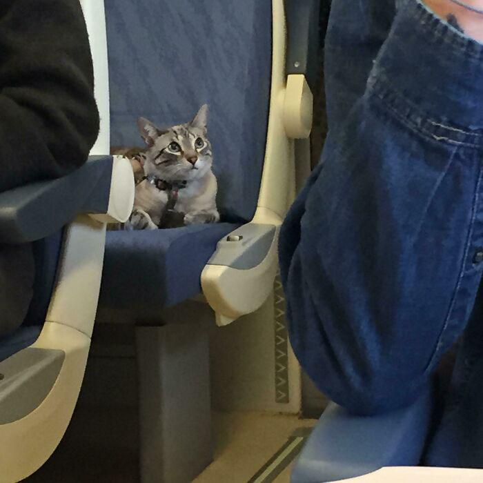 gatos viajando