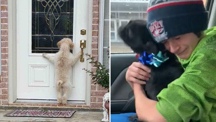 imagens emocionantes cachorros perdidos