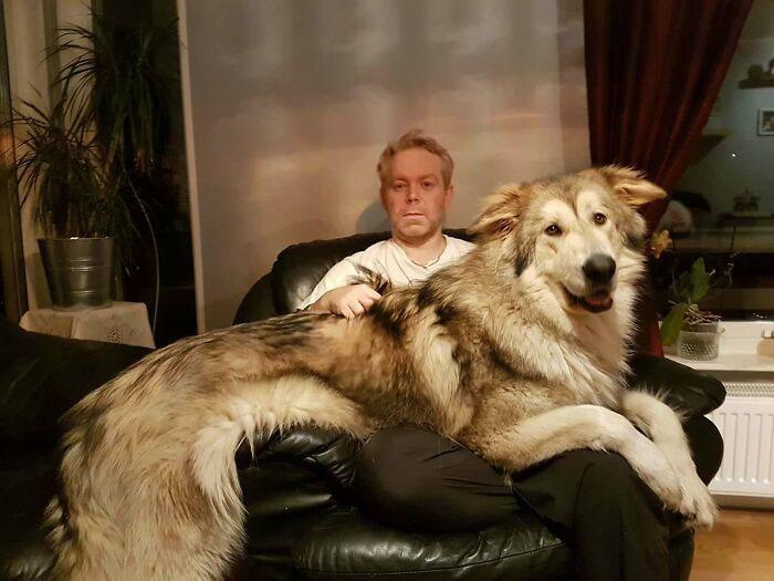 maiores cachorros