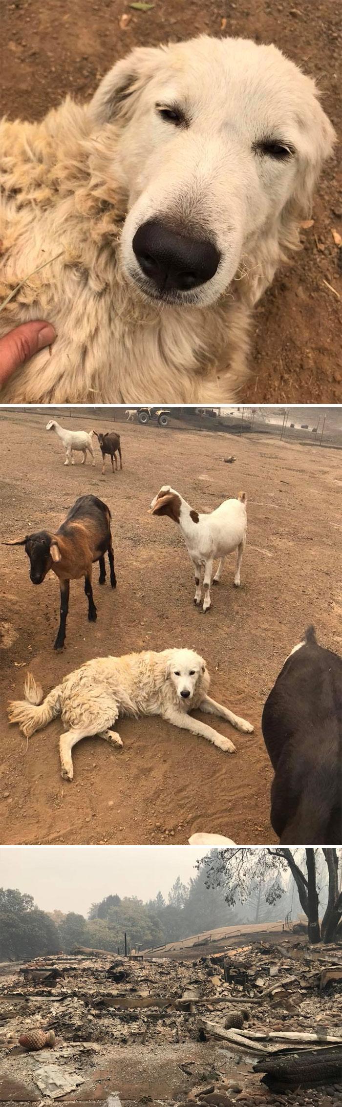 cachorros desaparecidos