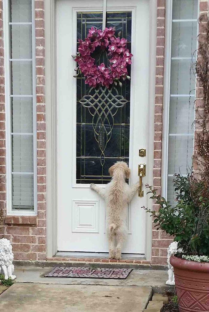 imagens emocionantes cachorros