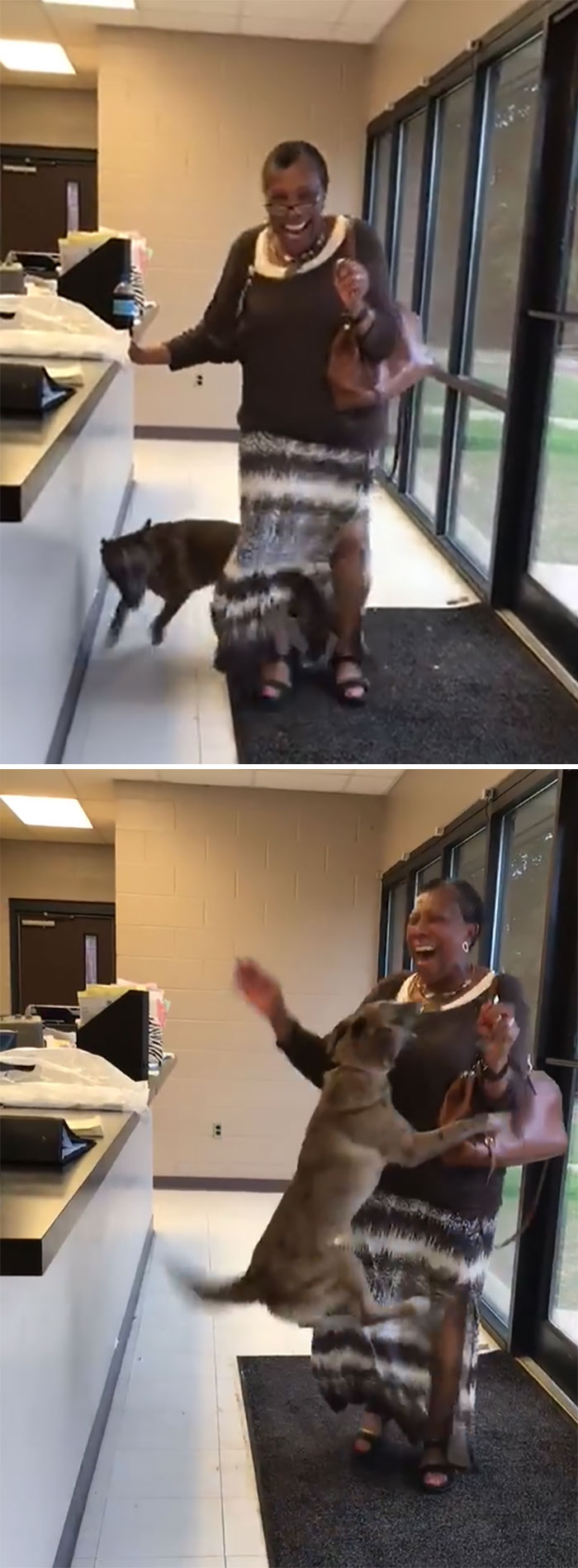 cachorro perdido se reúne com dona