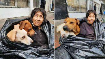 Moradora de rua recusa abrigo para não abandonar seus 6 cachorros