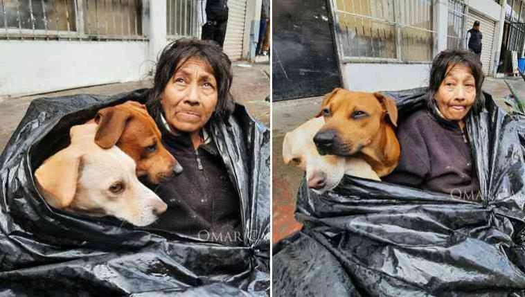 moradora de rua cachorros
