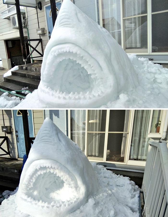 tubarão de neve