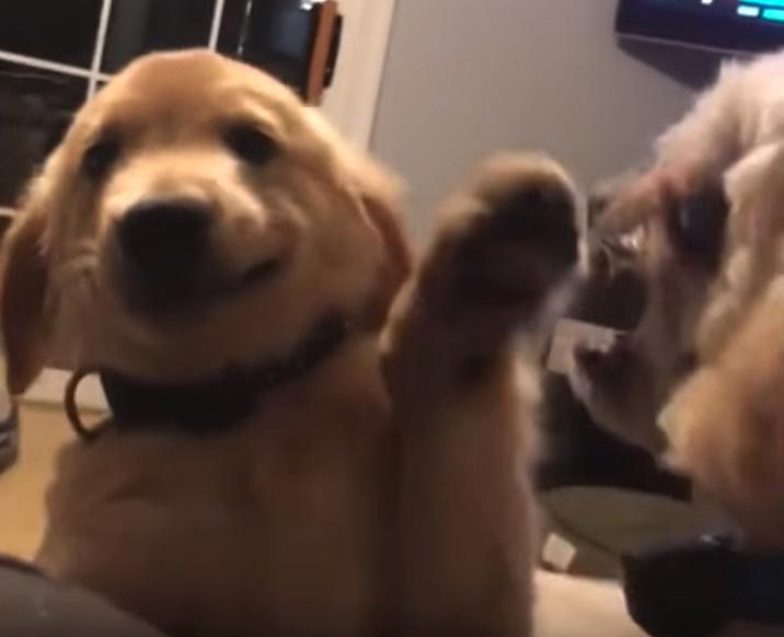 Cachorrinho calmo lida de forma hilária