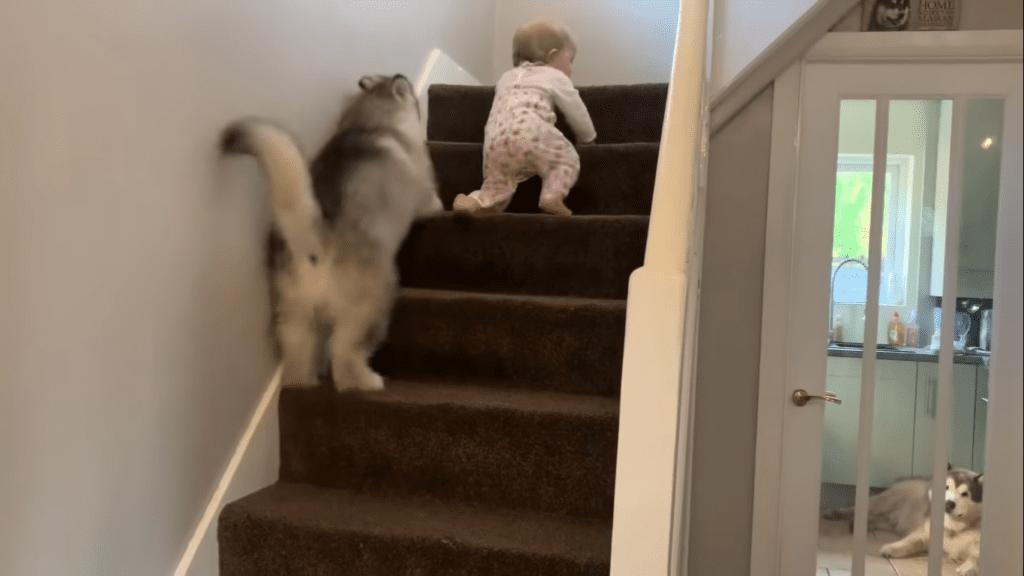 Cachorrinho e bebê trabalham em escada