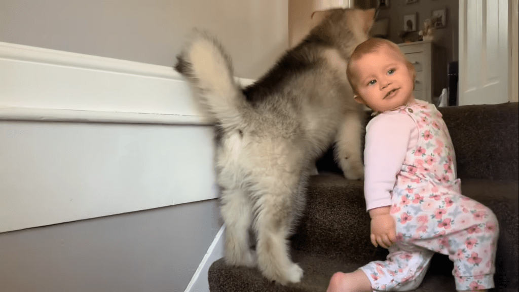 Cachorrinho e bebê trabalham escada