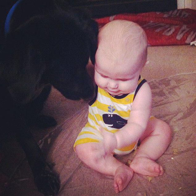 Cachorro age agressivamente perto de babá