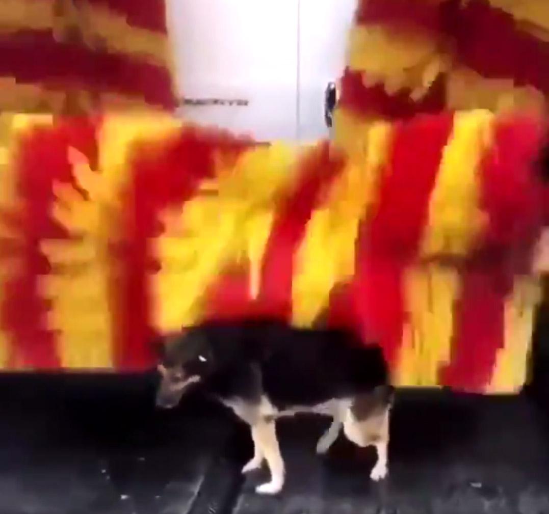 Cachorro de rua visita lava rápido