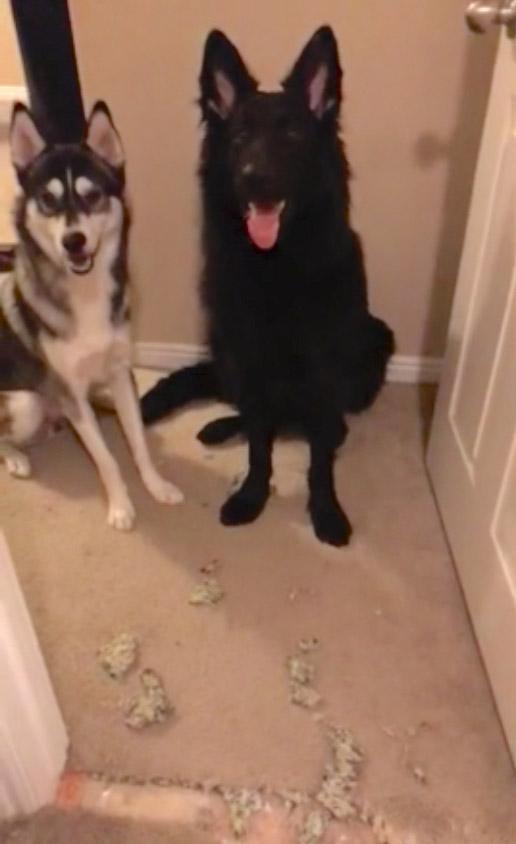 Cachorro dedura o irmão que destruiu