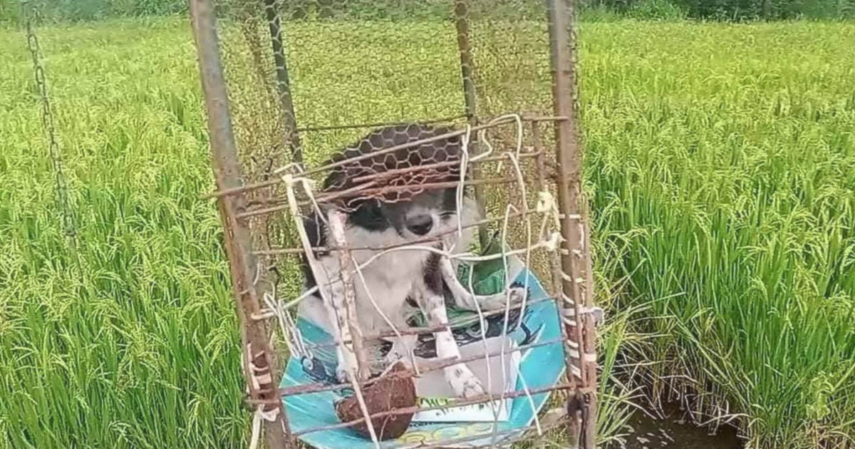 Cachorro era mantido preso em gaiola
