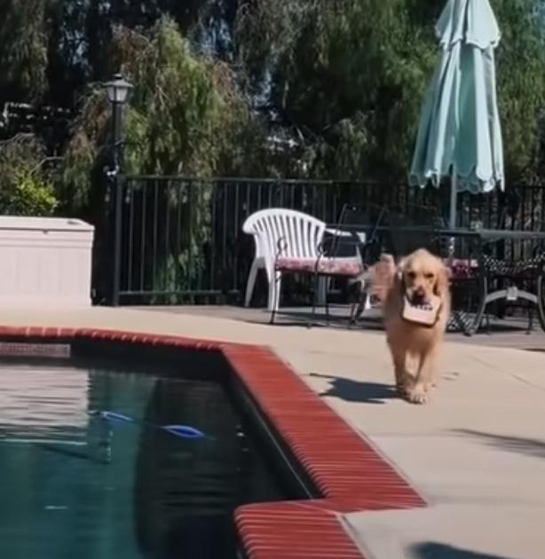 Cachorro joga brinquedos na piscina para