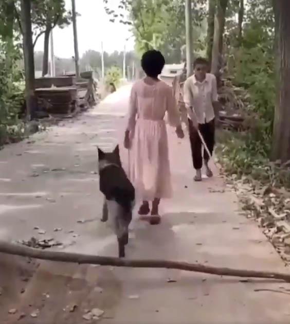 Cachorro remove galho do caminho