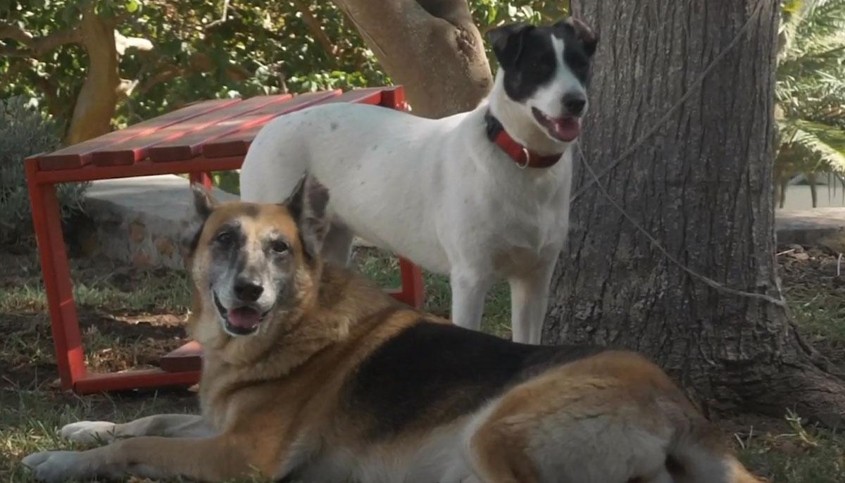 Cadela adquiriu câncer por exposição