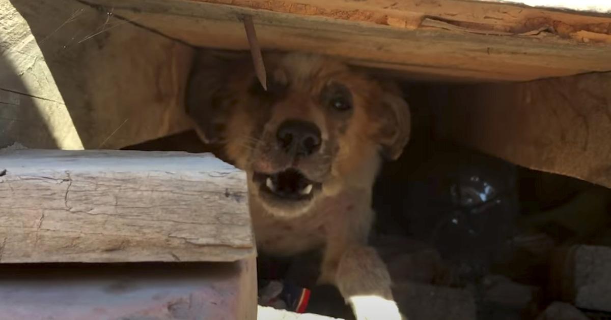 Cadela se esconde ao saber que donos queriam sacrificá-la