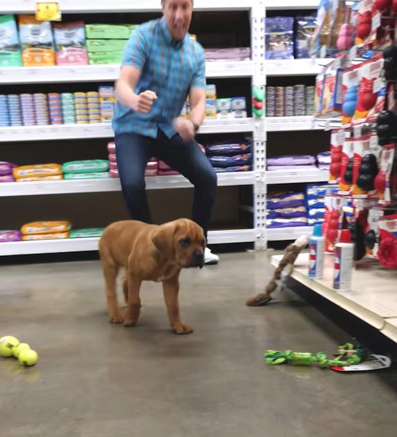 Cãozinho cego sem lar pet shop