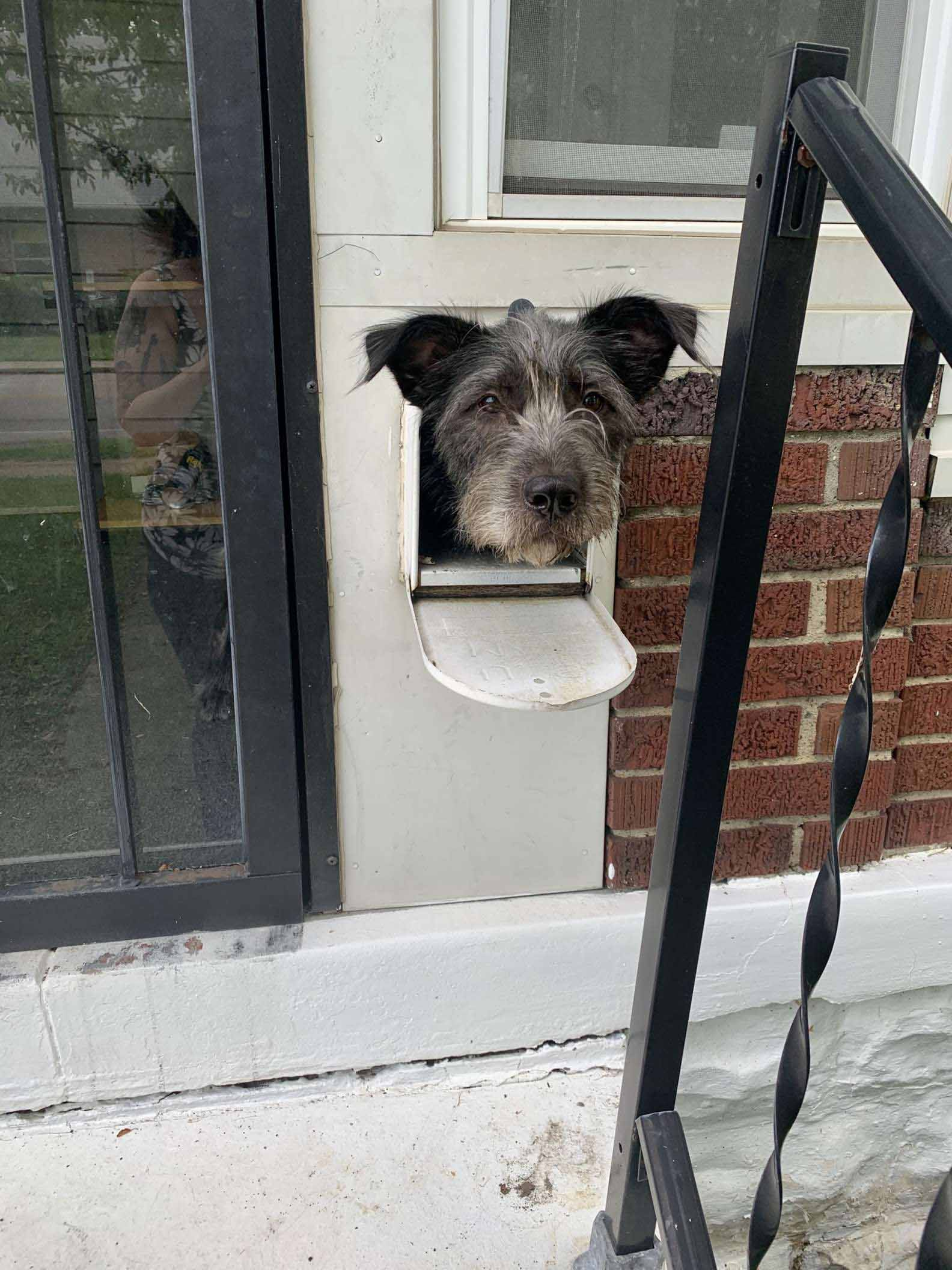 Cãozinho esperto usa caixa de correio