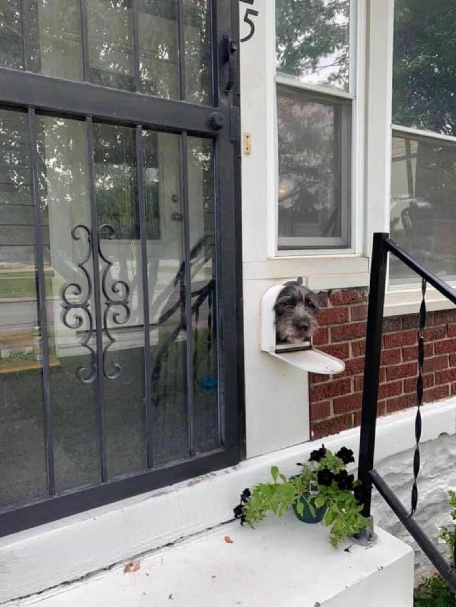 Cãozinho esperto usa caixa
