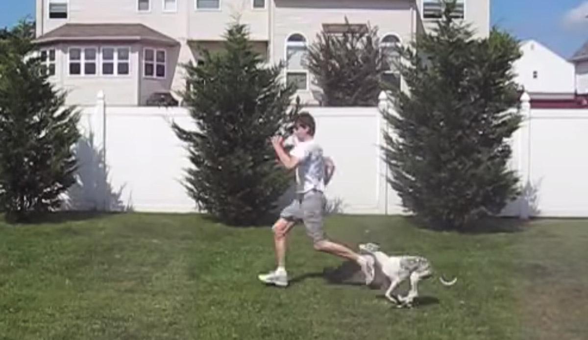 Donos deixam cachorro com babá e câmeras mostram