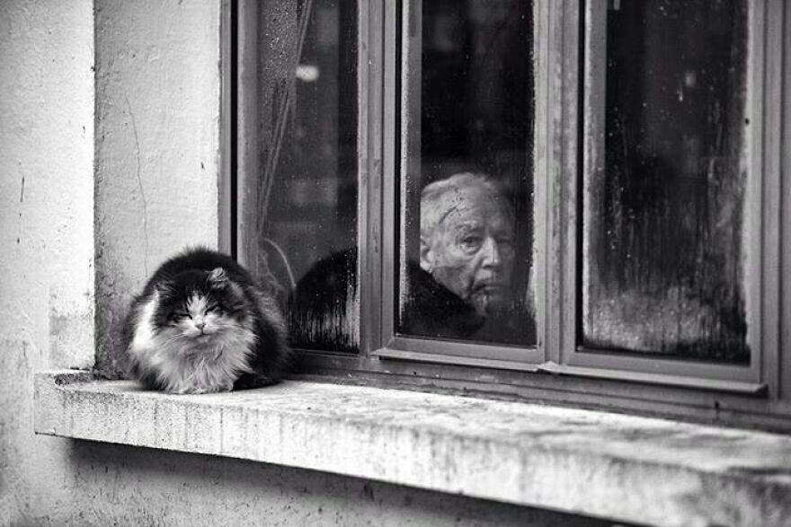 Fotos artísticas incríveis de gatinhos janela