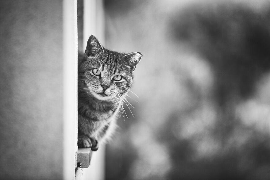 Fotos artísticas incríveis de gatinhos janelas