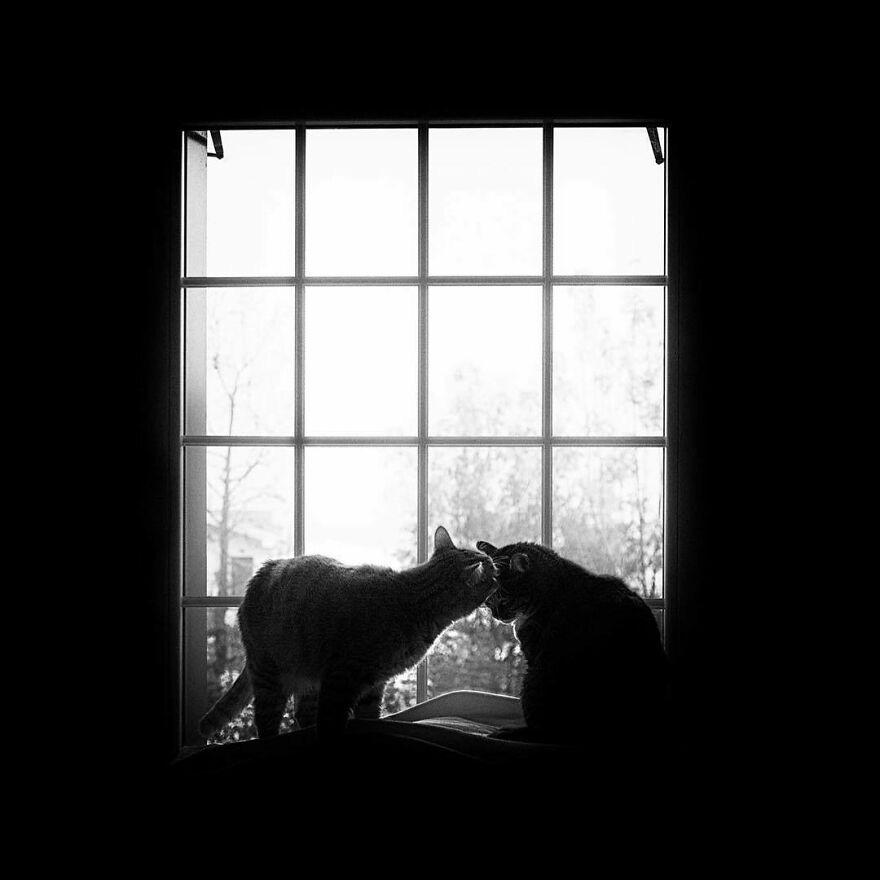Fotos artísticas incríveis de gatinhos lindos