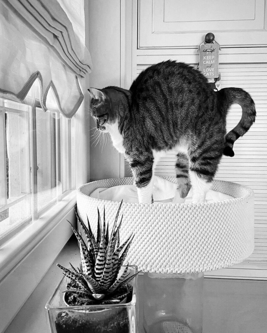 Fotos artísticas incríveis de gatinhos nas janelas
