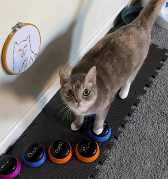 Gatinha aprende a usar botões para se comunicar
