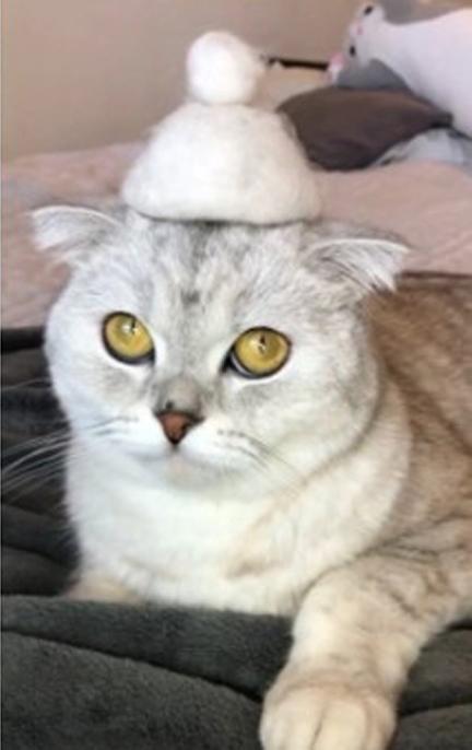 Gatinha fofa ostenta chapéu